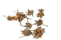 Maple Dead Leaves - Dry Leaves - Image 1